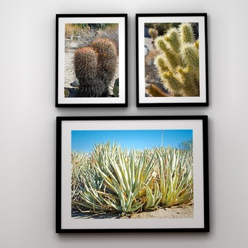 STOCK PHOTOS: Desert Plants - 21 Photos & Slideshow [Perso