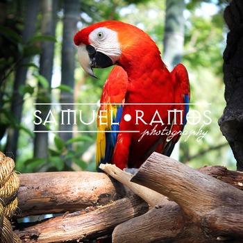 STOCK PHOTOS: Macaw Parrot [Personal & Commercial Use]