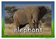Safari African Animals Photos/ Pictures for Display/ Poste
