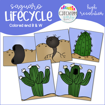 Saguaro Lifecycle Clipart