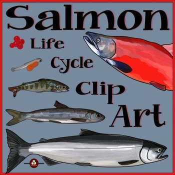 Salmon Life Cycle Clip Art