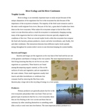Salmon and Ecology Curriculum