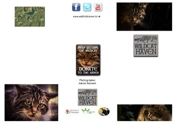 Save the Scottish Wildcat Leaflet For Use With Guided Read