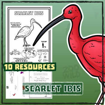 Scarlet Ibis -- 10 Resources -- Coloring Pages, Reading &