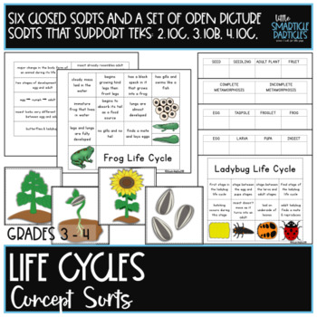 Life Cycles: Science Concept Sorts
