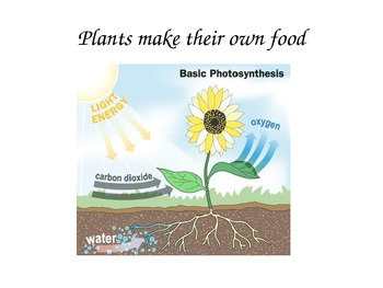Science -How Do Plants Get Food?