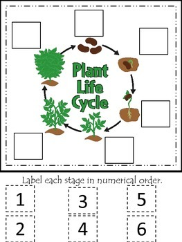 Science Life Cycle of a Plant Numerical Order preschool ho