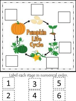 Science Life Cycle of a Pumpkin Numerical Order preschool