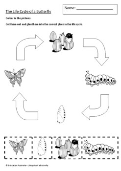 Science - Lifecycle of a Butterfly
