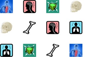 Science Memory: Anatomy