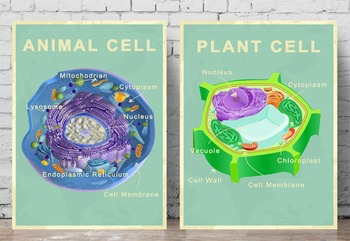 Science Posters - Animal and Plant Cell