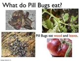 Science Unit: Pill Bugs with Workbook