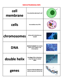 Science Vocablulary Cards for Cells