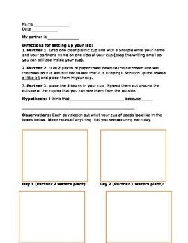 Science bean lab sheet