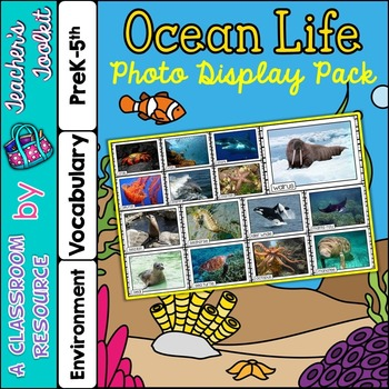 Ocean Life Photo Poster Display Pack {UK Teaching Resource}