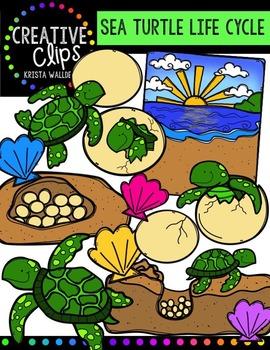 Sea Turtle Life Cycle {Creative Clips Digital Clipart}
