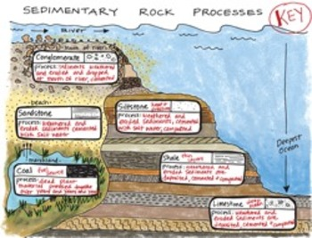 Sedimentary Rock Processes Interactive Notebook Foldable b