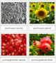 Seed & Plant Matching Cards