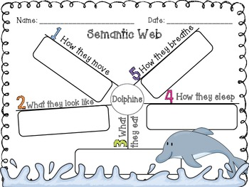 Semantic Map {All About Dolphins!}