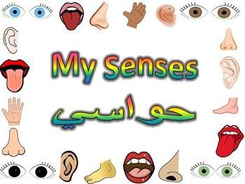 Senses Flashcards English and Arabic