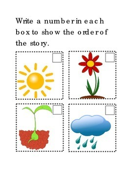 Sequencing How Flowers Grow Following Directions Comprehen