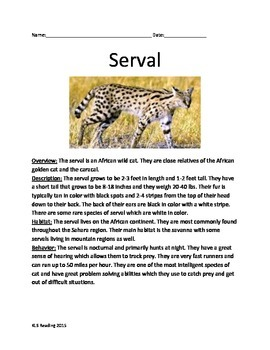 Serval Wild Cat - Informational Article Review Facts Quest