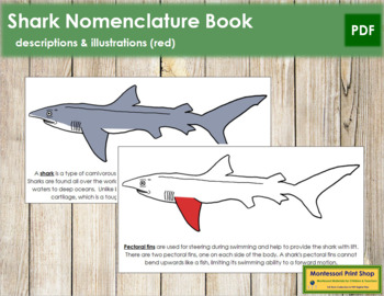 Shark Nomenclature Book (Red)