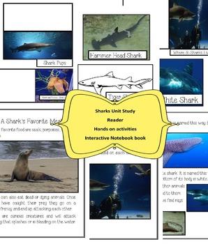 Shark Unit Study