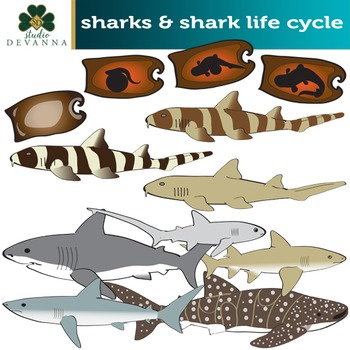 Sharks Clip Art  - Life Cycle Illustrations  Included