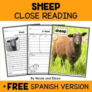Close Reading Sheep Activities