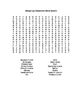 Sheep or Cow Eye Dissection Word Search