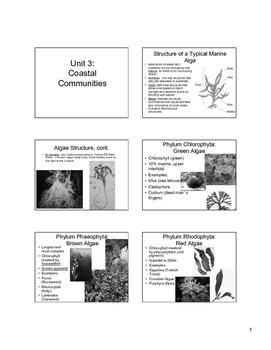 Shoreline Communities Powerpoint Slides 6 per page