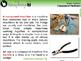 Simple Machines: Compound Machines - PC Gr. 5-8