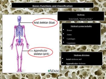 Skeletal Bone Physiology