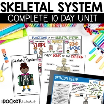 Skeletal System: Mini-unit including functions, bone facts