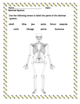 Skeletal System Assessment