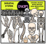 Skeletal System Clip Art Bundle