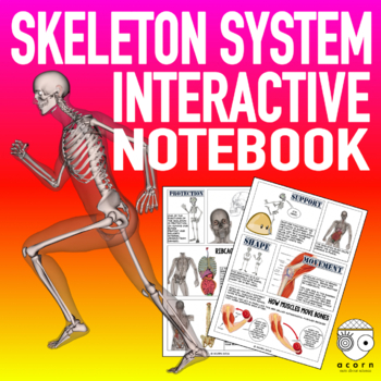 Skeletal System Interactive Notebook