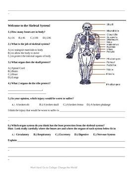 Skeletal System Lesson Plan