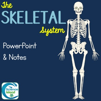 Skeletal System PowerPoint Lesson and Notes - Anatomy & Ph