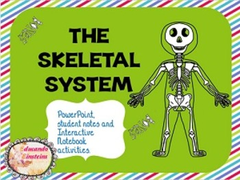 Skeletal System PowerPoint, Notes and Interactive Notebook