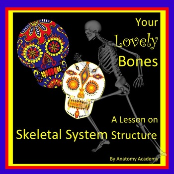 Human Skeletal System Structure Lesson Plan Fun Activity