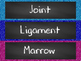 Skeletal System Word Wall