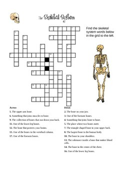 Skeletal Worksheet