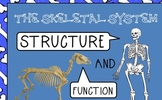 Skeletal system PWPT foldable Interactive Notebook notes 5