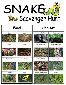 Snake Scavenger Hunt