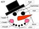 Snowman's Face Words Cut and Paste