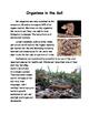 Soils Lesson 10 - Organisms in the Soil