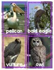 Sorting Animals by Characteristics **Easy Prep!!**