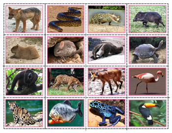 South American Animals: Mini Match-up Cards